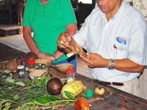 cinnamon Greneda plantation