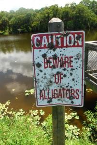photo of alligator sign